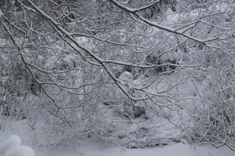 Mes Ellowynes dans la neige par Mellody - Page 2 Dsc01110