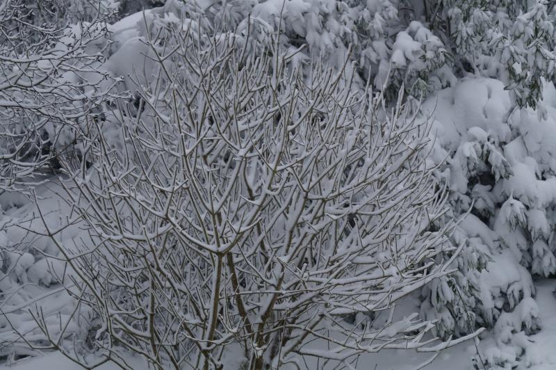 Mes Ellowynes dans la neige par Mellody - Page 2 Dsc01111