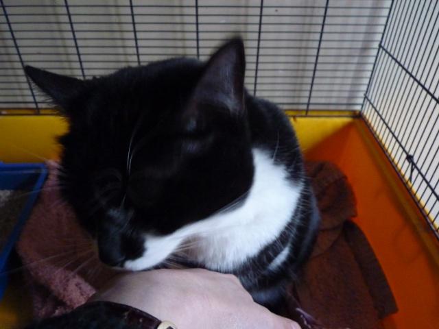 Chipie, 3 ans, noire et blanche P1000524
