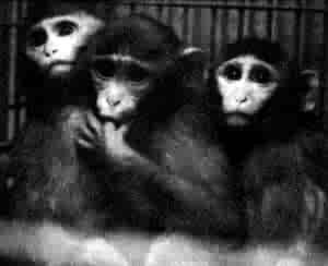 Les animaux dans les laboratoires 15166910