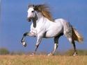Le Dico des races de chevaux Andalo10