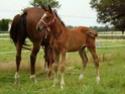Le Dico des races de chevaux Aqps10