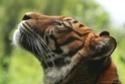 الطبيعة والحيوانات والافلام الوثائقية