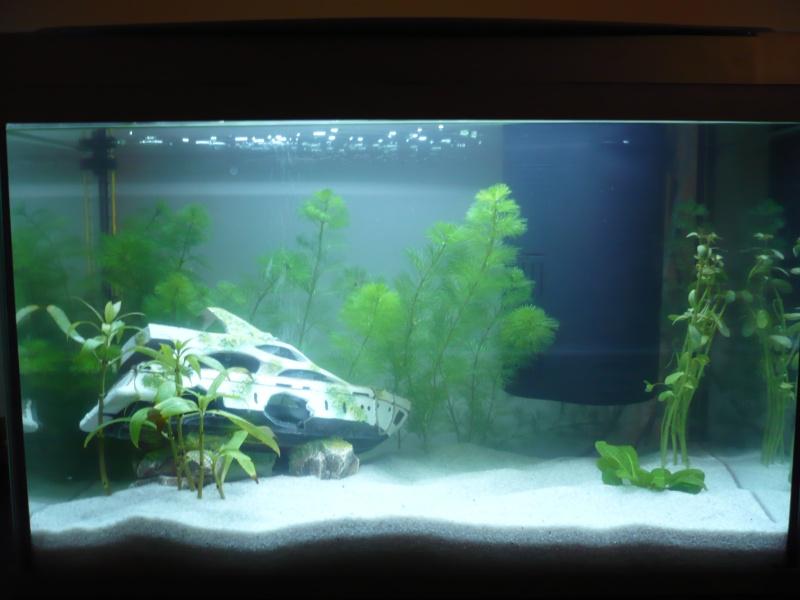 Présentation de mon premier aquarium Evo_2810