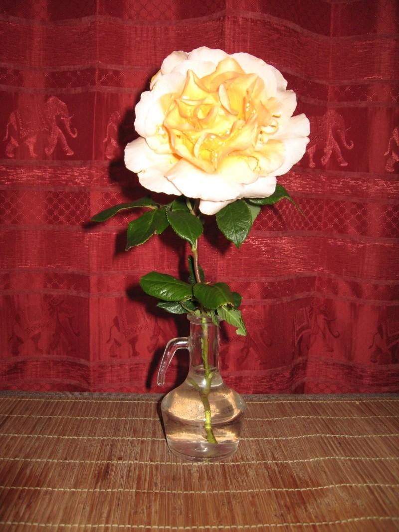 le royaume des rosiers...Vive la Rose ! Rose_j10