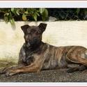 Trouvé chien à BOSC ROGER EN ROUMOIS 57606210