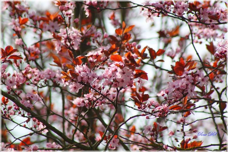 La nature s'éveille Img_0911