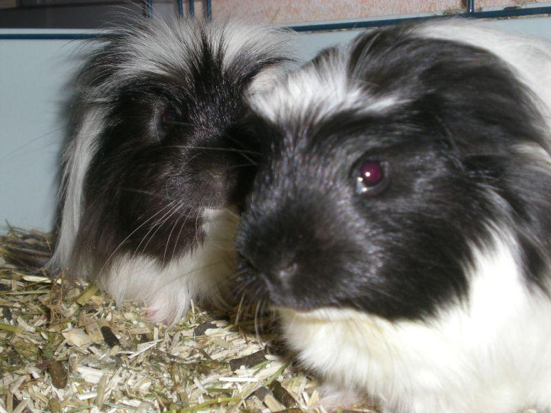 Concours du mois de Février 2010 : Thème : Animal de compagnie Site10