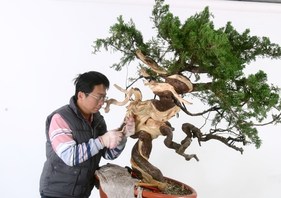Nov 2009 Cheng,Cheng-Kung Bonsai school Hsiaom10