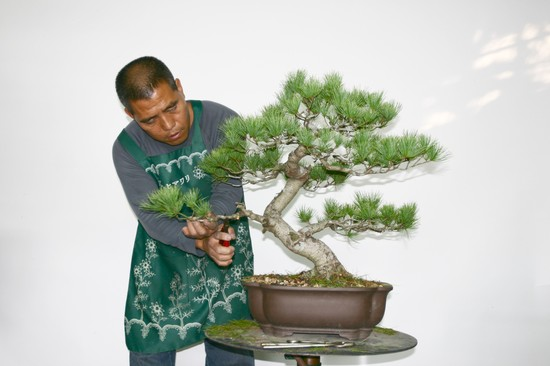 Nov 2009 Cheng,Cheng-Kung Bonsai school Linchi10