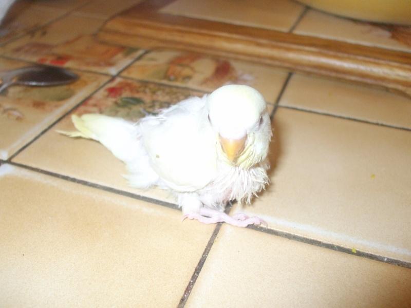 arrachage de plumes ! 01510