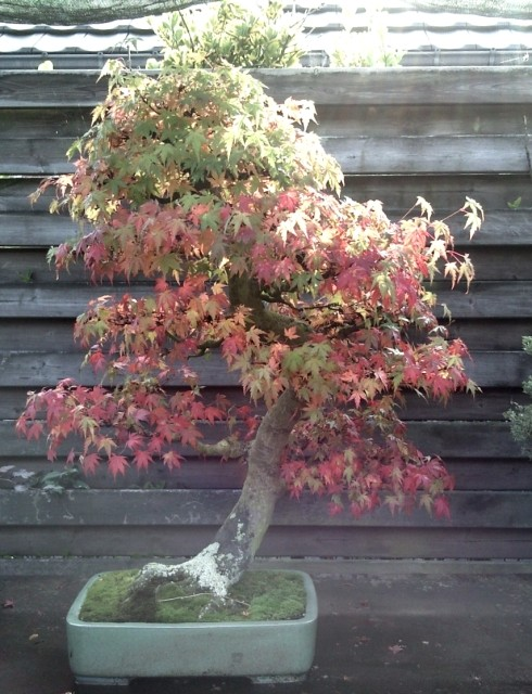Conseils pour mon premier pré-bonsaï Photo610