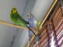 Les sorties de mes cocos... Imgp2019