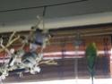Les sorties de mes cocos... Imgp2114