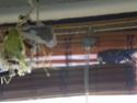 Les sorties de mes cocos... Imgp2115