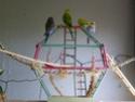 Les sorties de mes cocos... Imgp2210