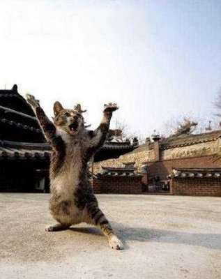 Gambar - Gambar Binatang Tergokil di Dunia Internet! 1_guru18