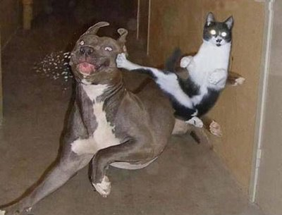 Gambar - Gambar Binatang Tergokil di Dunia Internet! 2_kara12