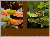 Plantas utiles 6.9.2 Planta11
