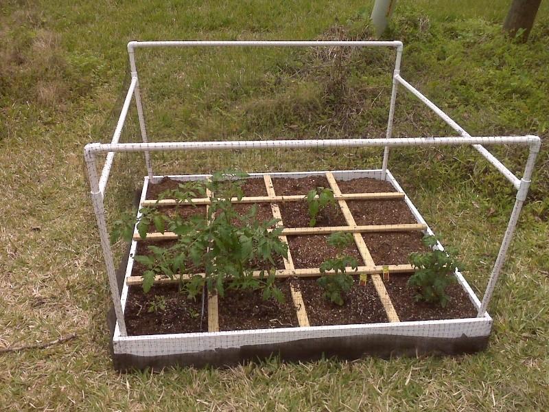 Central Florida Starter Garden Img00012