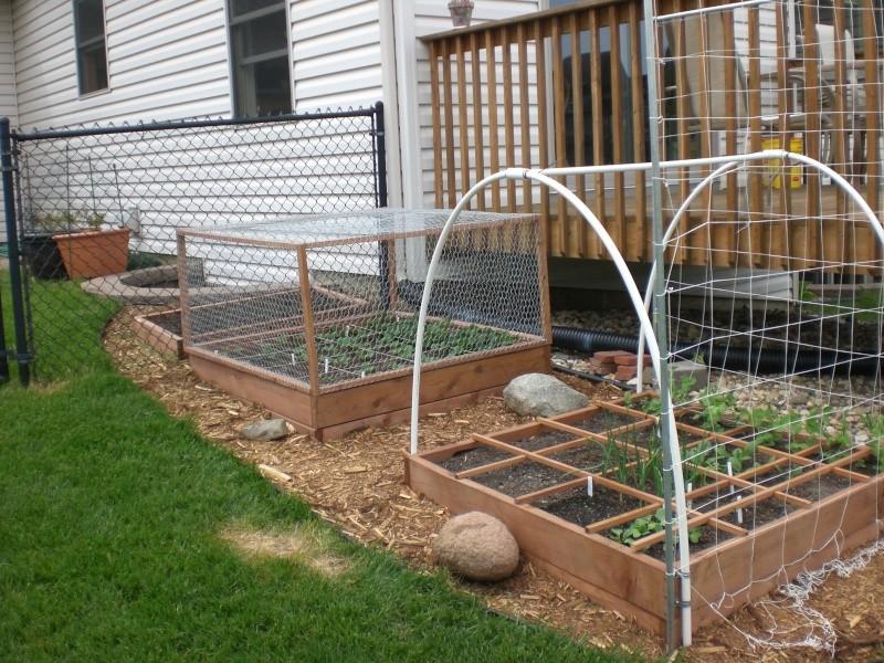 Garden update 05310