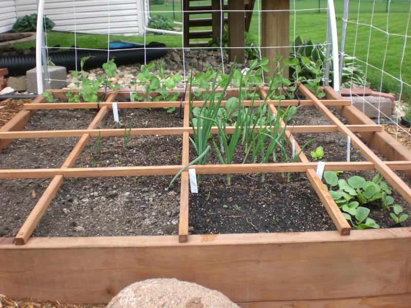 Garden update 05410