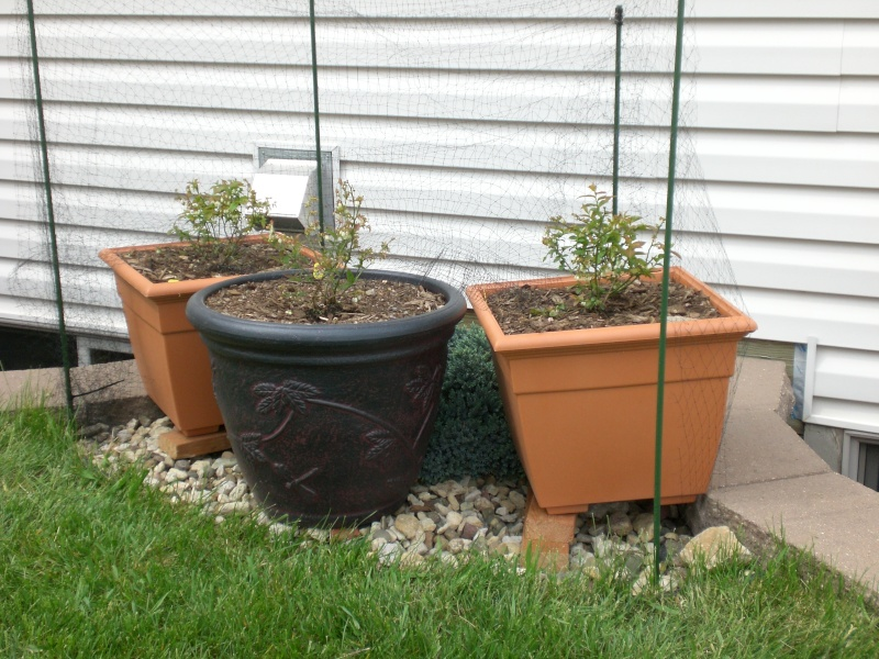 Garden update 05610
