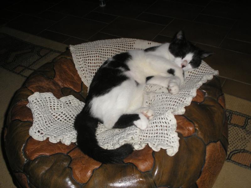 Fergie, petite puce noire et blanche - Saint Amand Les Eaux (59) - chaton 2010 Dsc_0310