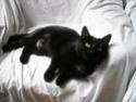 Dora, jolie panthère noire, un an et demi, FA à ROUBAIX Dscn0610