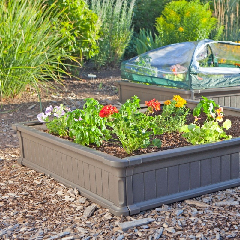 Planting Lettuce Seeds Lifeti10