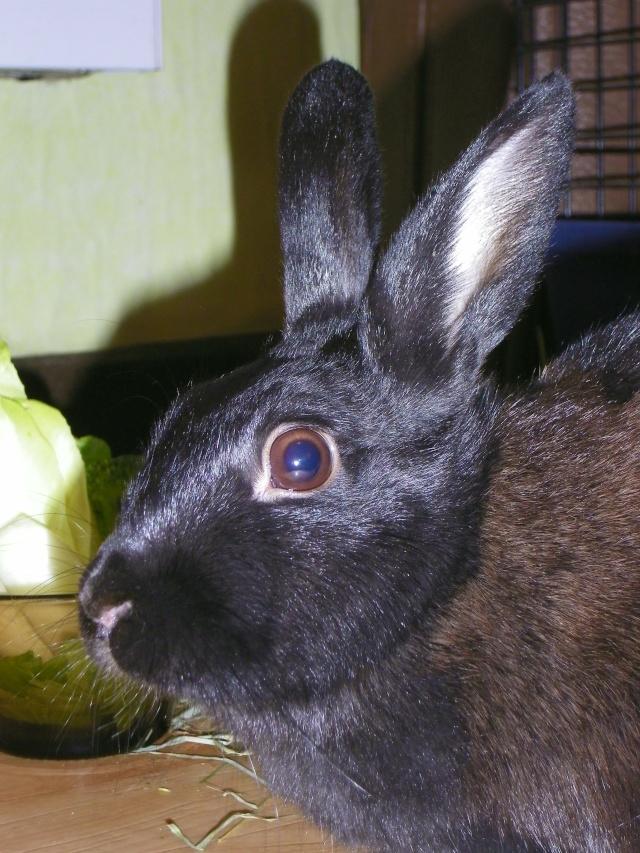 Olive, lapine noire, jeune - Page 3 Olive_11