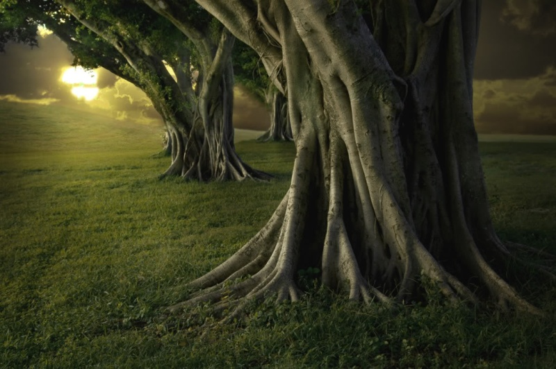 IMAGES TO NOURISH THE SPIRIT AND TOUCH THE HEART Forest10