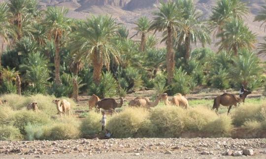 Le Maroc riposte aux effets pervers Americains Mimoun40
