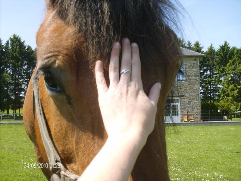 Le cheval dans toute sa splendeure - Vidéo Hpim2310