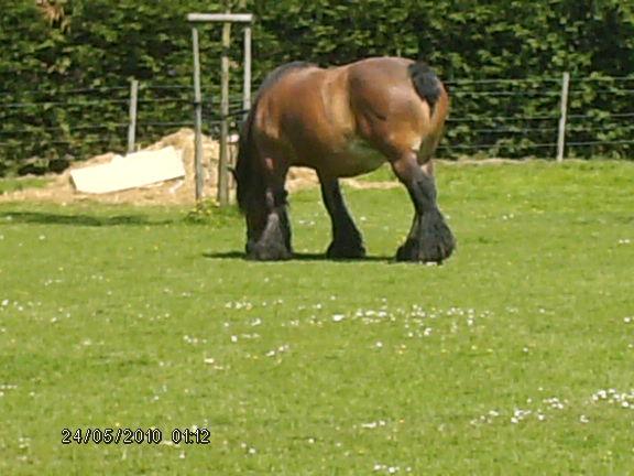 Le cheval dans toute sa splendeure - Vidéo Hpim2311