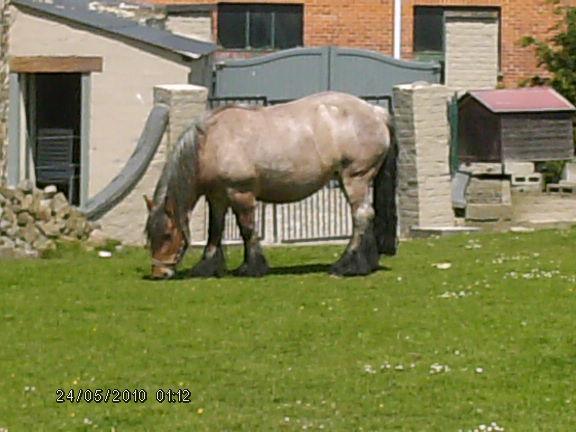 Le cheval dans toute sa splendeure - Vidéo Hpim2312