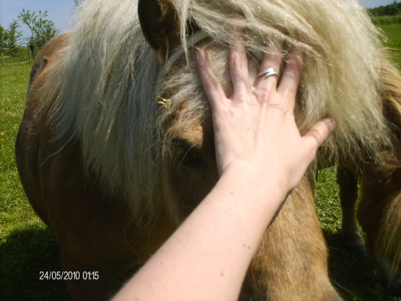 Le cheval dans toute sa splendeure - Vidéo Hpim2317