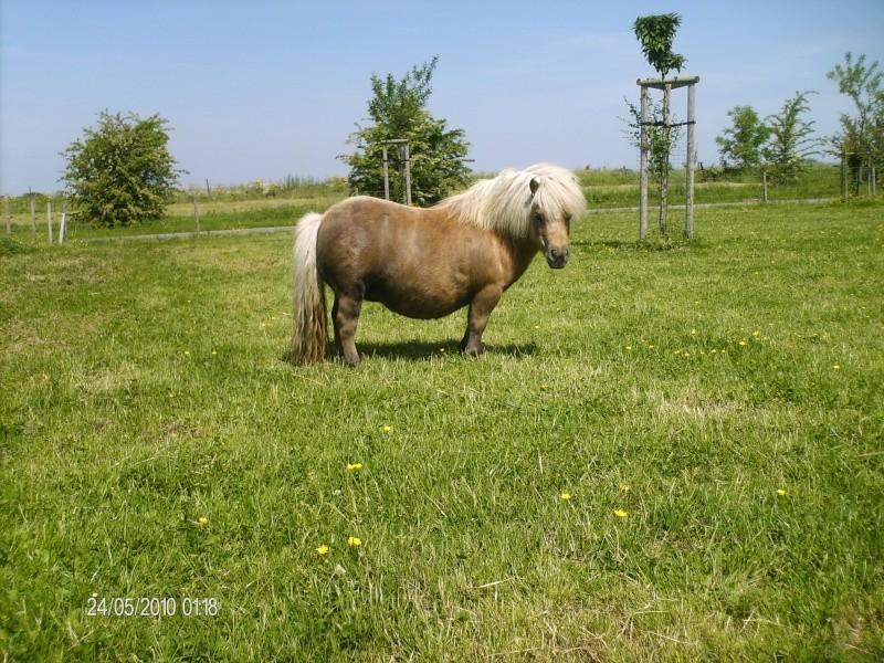 Le cheval dans toute sa splendeure - Vidéo Hpim2318