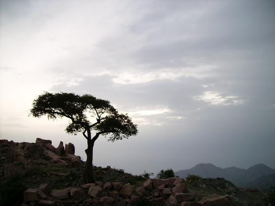 جبل الجاح القبيطة 11121310