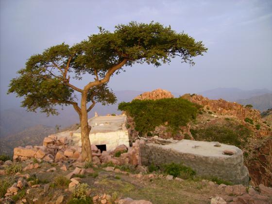 جبل الجاح - القبيطة 11121410