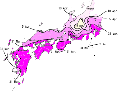 [Japon] - Les Sakuras 桜, les cerisiers symbole d'une nation Sakura10