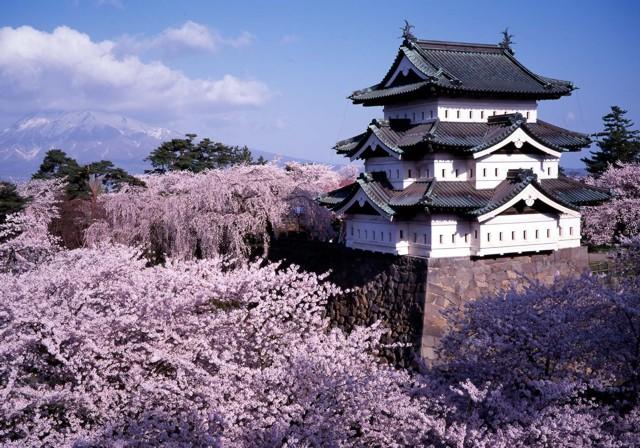 [Japon] - Les Sakuras 桜, les cerisiers symbole d'une nation Shinob10