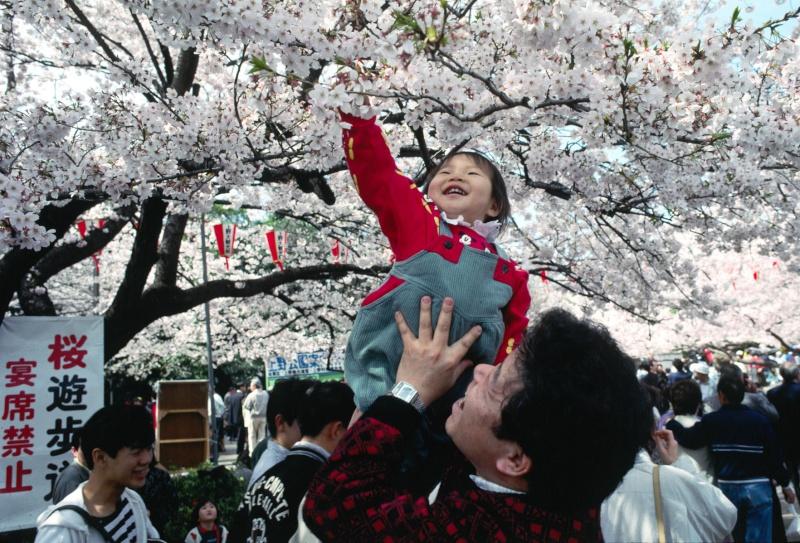 [Japon] - Les Sakuras 桜, les cerisiers symbole d'une nation Uenopa10