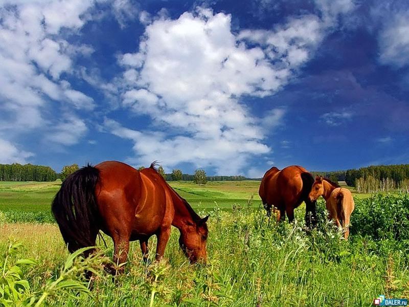 ролевая игра про лошадей