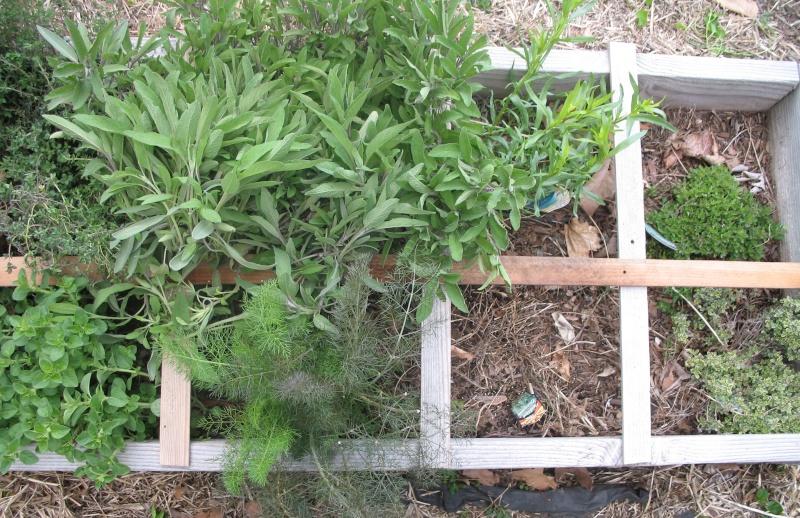 Herb Spacings Pherbs11
