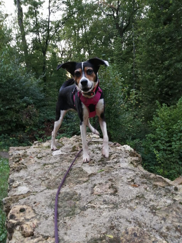 Bella, X beagle 10 ans, par Coyotl Img_2540