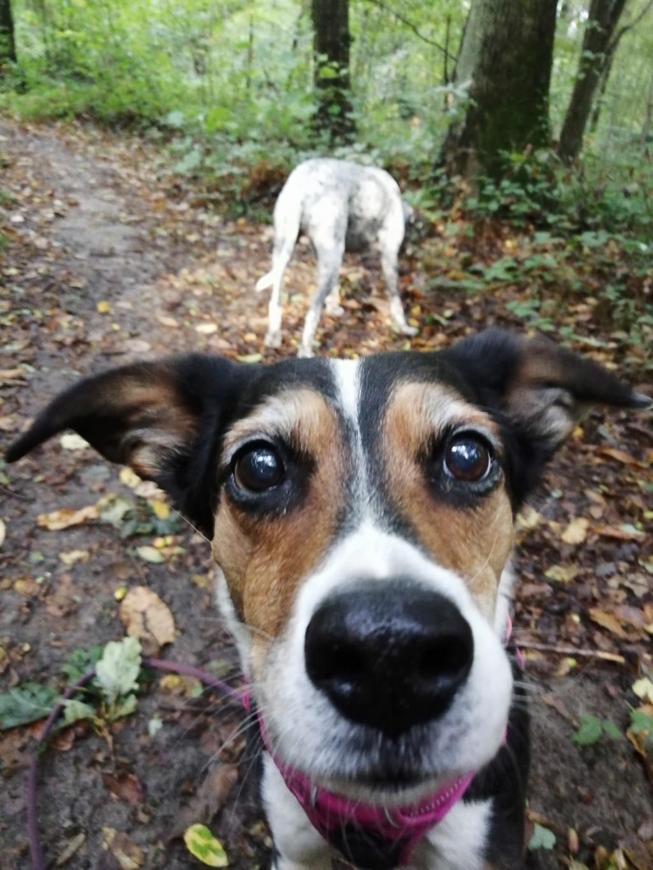 Bella, X beagle 10 ans, par Coyotl Img_2542