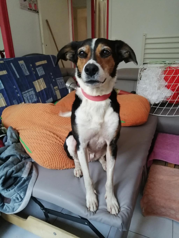 Bella, X beagle 10 ans, par Coyotl Img_2546