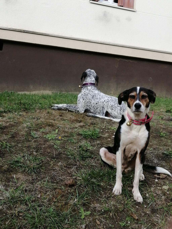 Bella, X beagle 10 ans, par Coyotl Img_2550