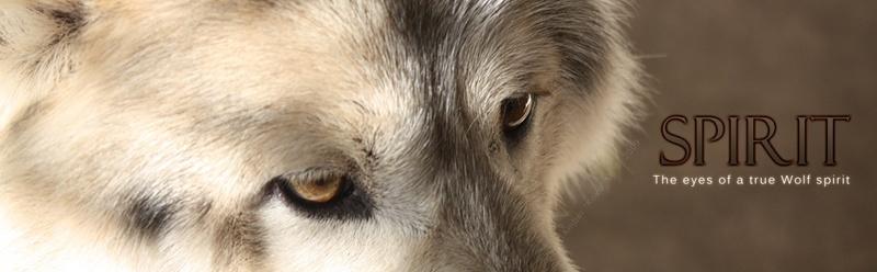 Spirit,quand l'esprit vient du loup... Spirit10